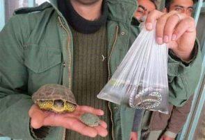 ممنوعیت خرید و فروش برخی گونه های جانوری در ایام پایانی سال