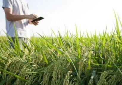 لزوم برنامه ریزی جهت جلوگیری از خلل در روند تولید و صادرات کشاورزی