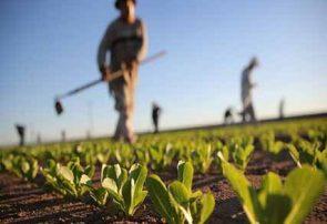 فعالیتهای کشاورزی تعطیل بردار نیست
