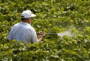 آخرین وضعیت کنترل آفات باغات و مزارع آذربایجان شرقی