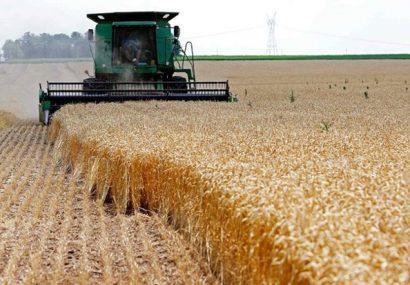 مدیر زراعت سازمان جهاد کشاورزی آذربایجان شرقی خبر داد؛ افزایش ۴۷ درصدی قیمت پایه خرید تضمینی گندم