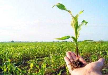آموزش در تولید محصول سالم چه نقشی دارد؟