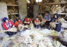 احیای صنعت نوغانداری بعد از ۲۵ سال در شهرستان کلیبر