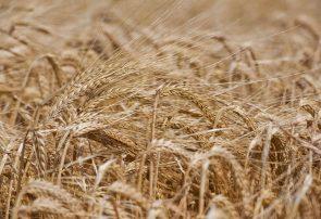 به زراعی، پیشنیاز جهش تولید در بخش کشاورزی