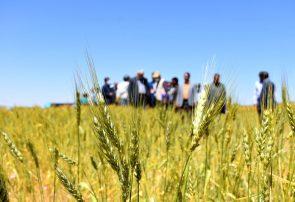 طرح امنیت غذایی در ۱۳ شهرستان آذربایجانشرقی در حال اجراست