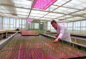 پیش بینی تولید ۶ تن هسته اولیه بذر در موسسه تحقیقات دیم کشور