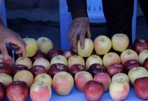 سیبهای خوش رنگ و لعاب مراغهای مهمان بازارهای خارجی