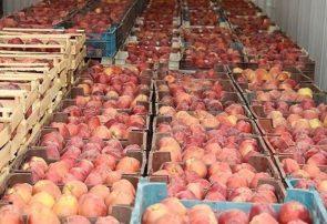 افزایش ۴۳ درصدی صادرات کشاورزی آذربایجانشرقی