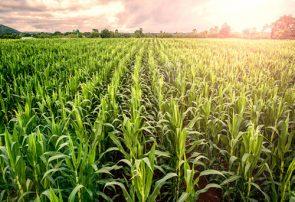 چیستی نقش دانش آموختگان در توسعه کشاورزی