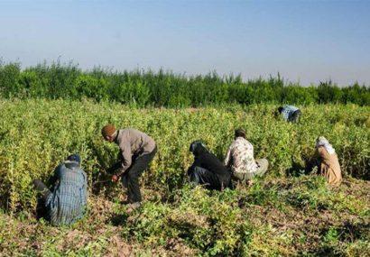 سند اشتغال در پنج روستای آذربایجانشرقی در حال اجراست