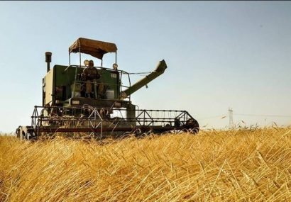 ۳۵ هزار تن گندم از اراضی کشاورزی مراغه برداشت شد