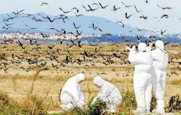 نتایج آزمایش آنفلوآنزای پرندگان در آذربایجانشرقی منفی است