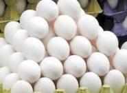 تخصیص نهاده خوراکی به واحدهای تولیدی مرغ تخمگذار هریس در ازای تحویل تخم مرغ