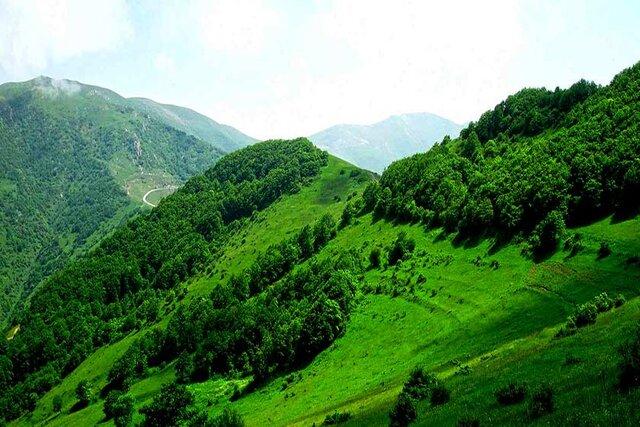 قطع ۲۳ هزار اصله درخت جنگلی در ارسباران توسط مس سونگون