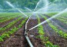 پیش بینی تولید ۶۷۴ هزار تن سبزی و صیفی در آذربایجان شرقی