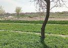 یادگاری به جا مانده از باغشهر تبریز