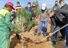 تعداد درختان محدوده دفن پسماند تبریز به ۴۰ هزار اصله افزایش مییابد
