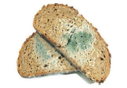 نان کپک زده را دور بریزید