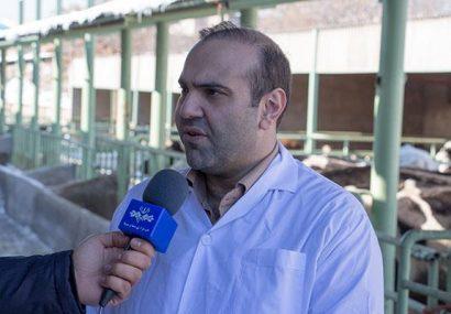 آغاز طرح واکسیناسیون دامها بر علیه بیماری لمپی اسکین در آذربایجان شرقی