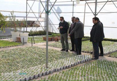 شهرداری تبریز در تولید گل و گیاه به خودکفایی رسیده است