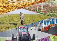 چرایی تولید صادرات محور محصولات کشاورزی