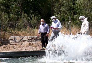 کاهش ۸۰ درصدی بروز بیماری IHN در ماهیان قزل آلای آذربایجان شرقی