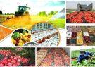 برای افزایش صادرات محصولات کشاورزی چه می توان کرد؟