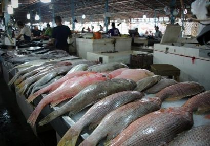هشدار درباره سرانه پایین مصرف ماهی در آذربایجانشرقی