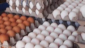 آذربایجان شرقی رتبه ۴ کشور در تولید تخم مرغ